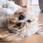 honden kauwbot